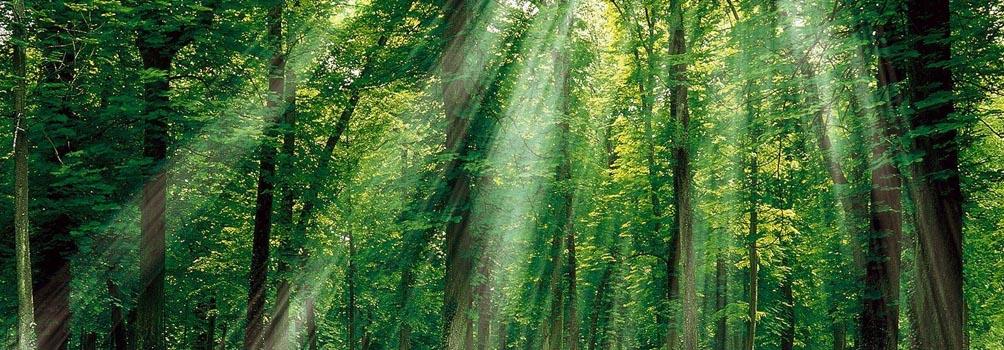 floresta1